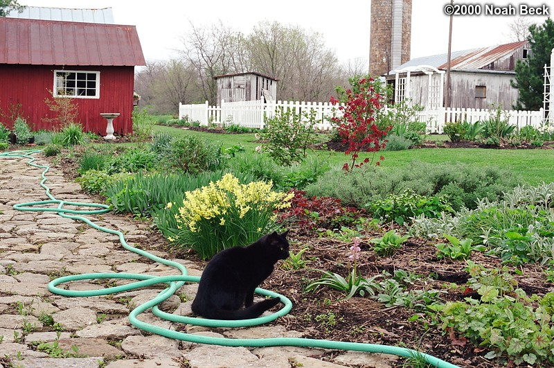 April 22, 2000: Oliver keeping watch over my mother's flower garden