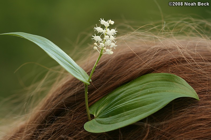 May 26, 2008: A wildflower in Roz's hair